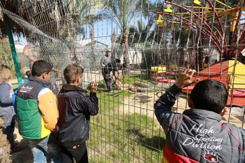 Zoo i Rafah ger besökare en möjlighet att spela med djur i Gazaremsan arkivfoton