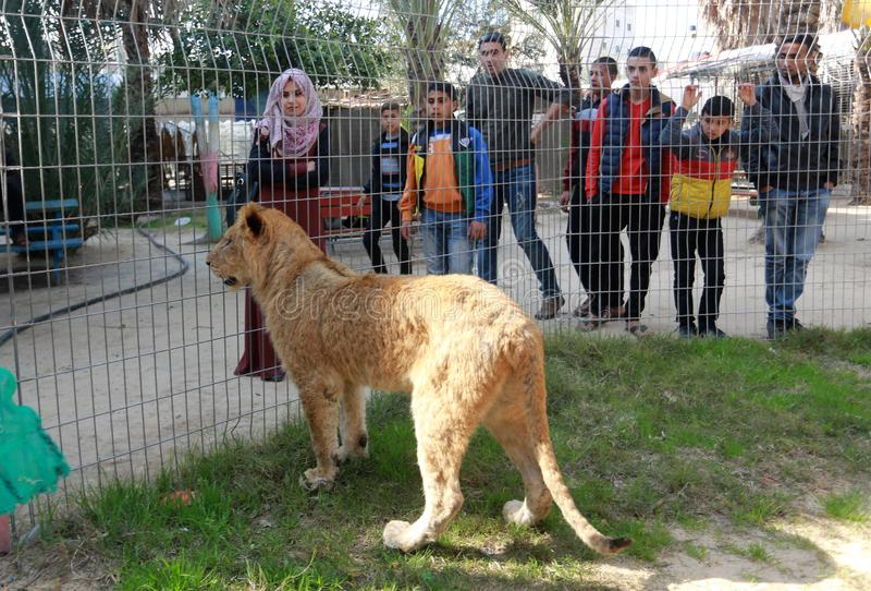 Zoo i Rafah ger besökare en möjlighet att spela med djur i Gazaremsan arkivbild