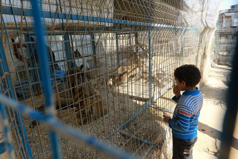 Zoo i Rafah ger besökare en möjlighet att spela med djur i Gazaremsan fotografering för bildbyråer