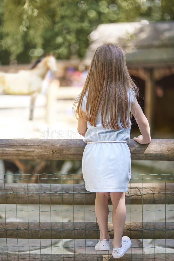 Zoo. Little girl looking on animals at the zoo royalty free stock image