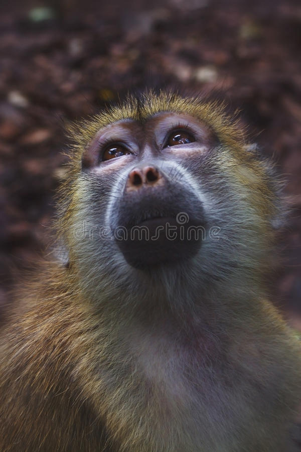 Download Zoo monkeys stock image. Image of expression, cute, animal - 26518521