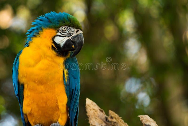 Zoo, Parque, Itatiba, zdjęcia stock