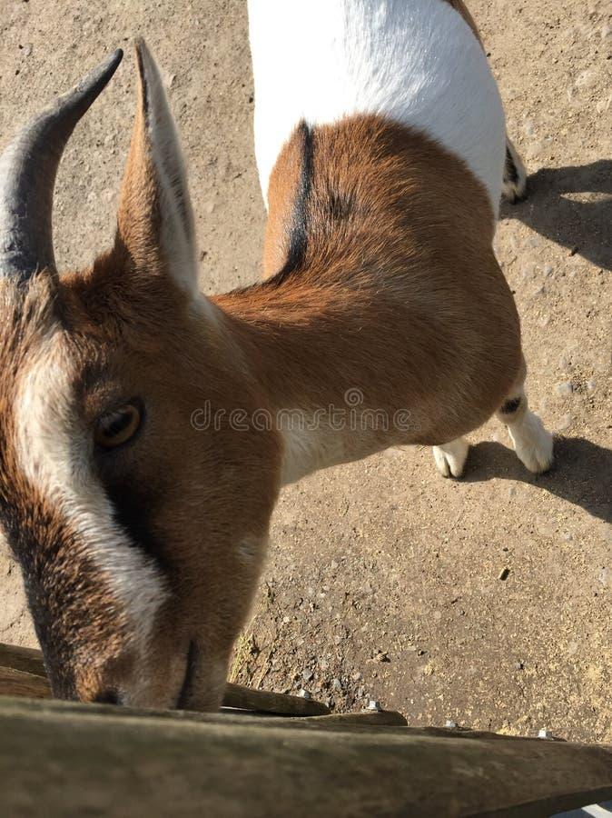 Zoo Sababurg lizenzfreie stockfotografie