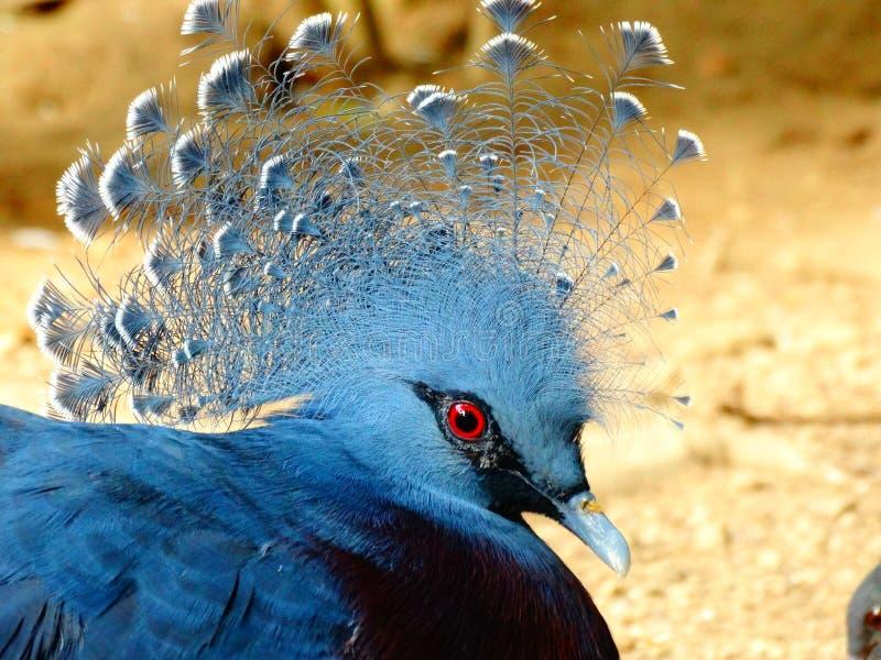 Zoo Servion et Tropiquarium de Servion - 2017 photos libres de droits
