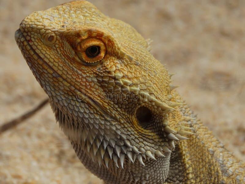 Zoo Servion et Tropiquarium de Servion - 2017 images libres de droits