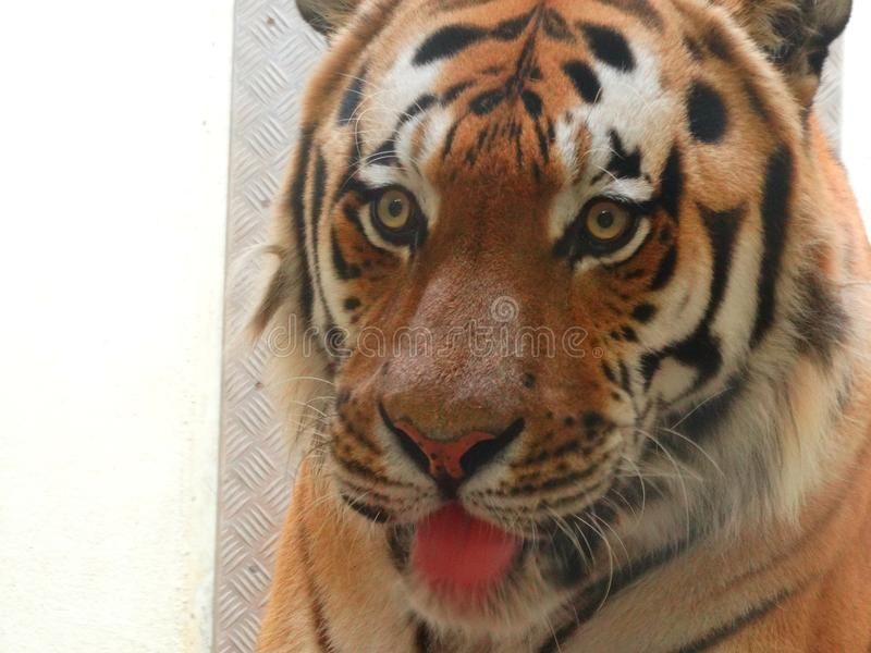 Zoo Servion et Tropiquarium de Servion - 2017 photos stock