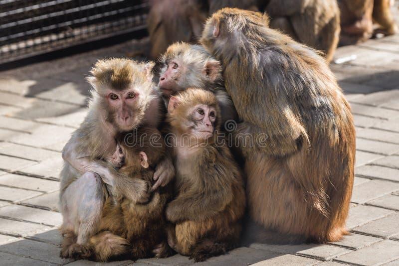Zoo w Pekin zdjęcie stock