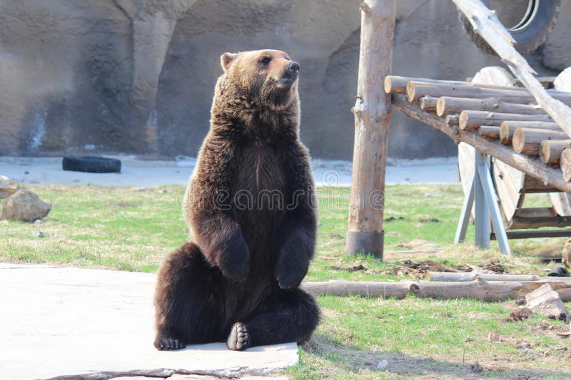 In a zoo. Wild animal animals and birds freely feel in a zoo royalty free stock photography