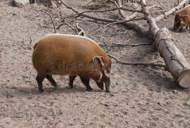 Zooanimals stock photography