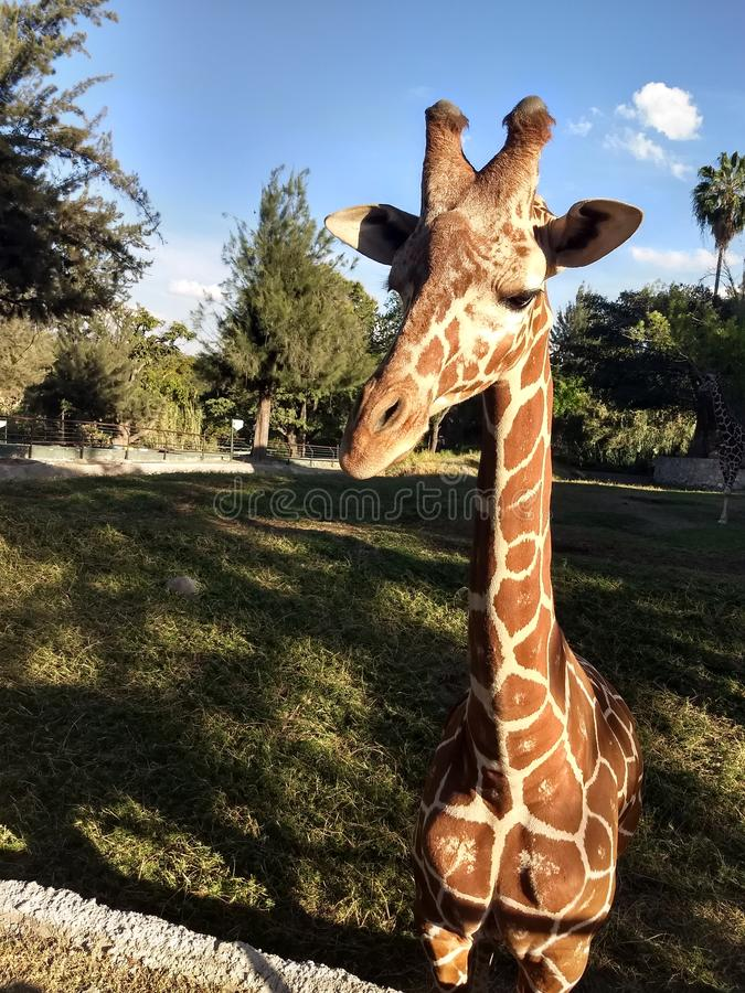 Zoodag 1 royaltyfria foton