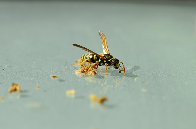 Zoologia, insetti fotografia stock