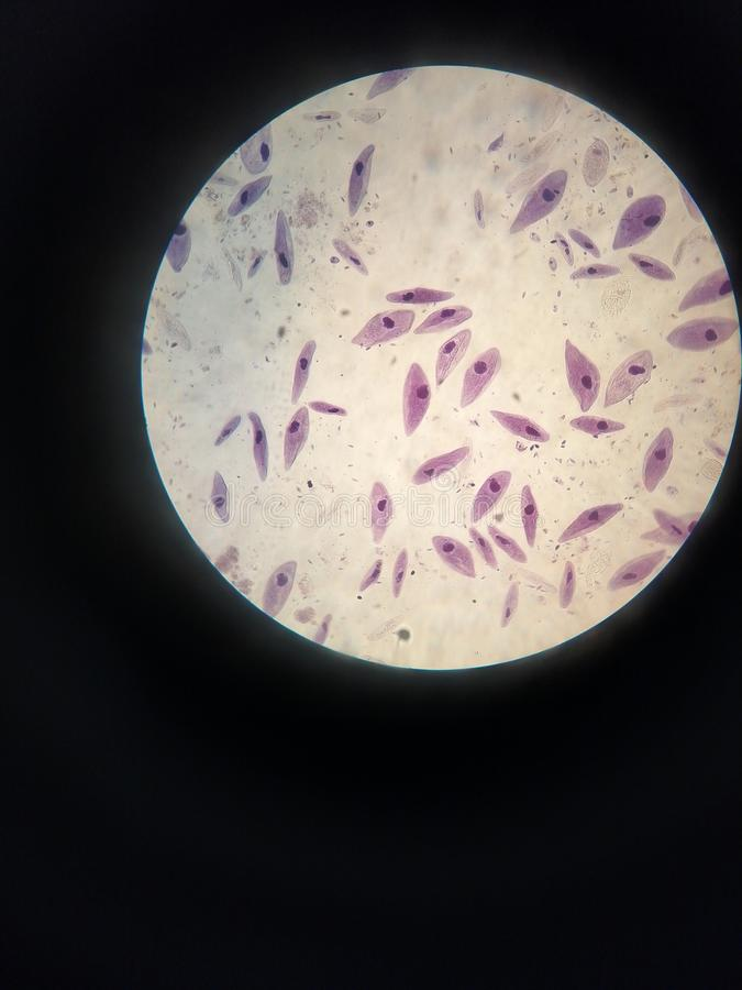 zoologie stockfotos