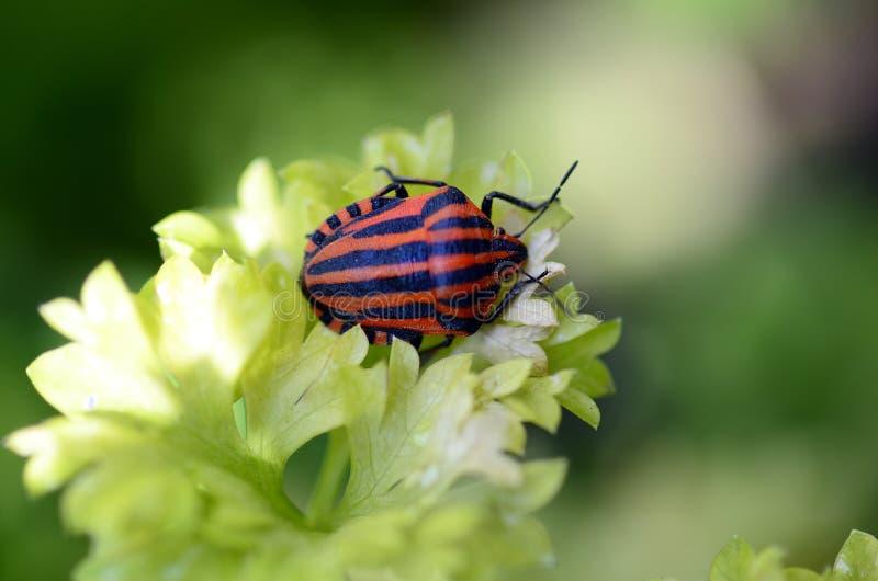 Zoologie, Insekt stockbilder