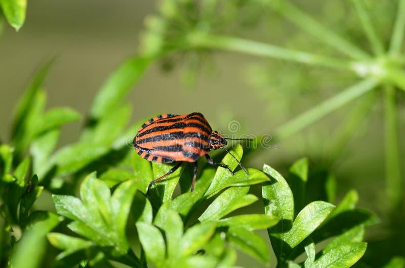 Zoologie, Insekt stockbild