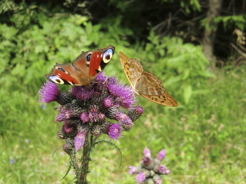 Zoologie, Insekten stockbild