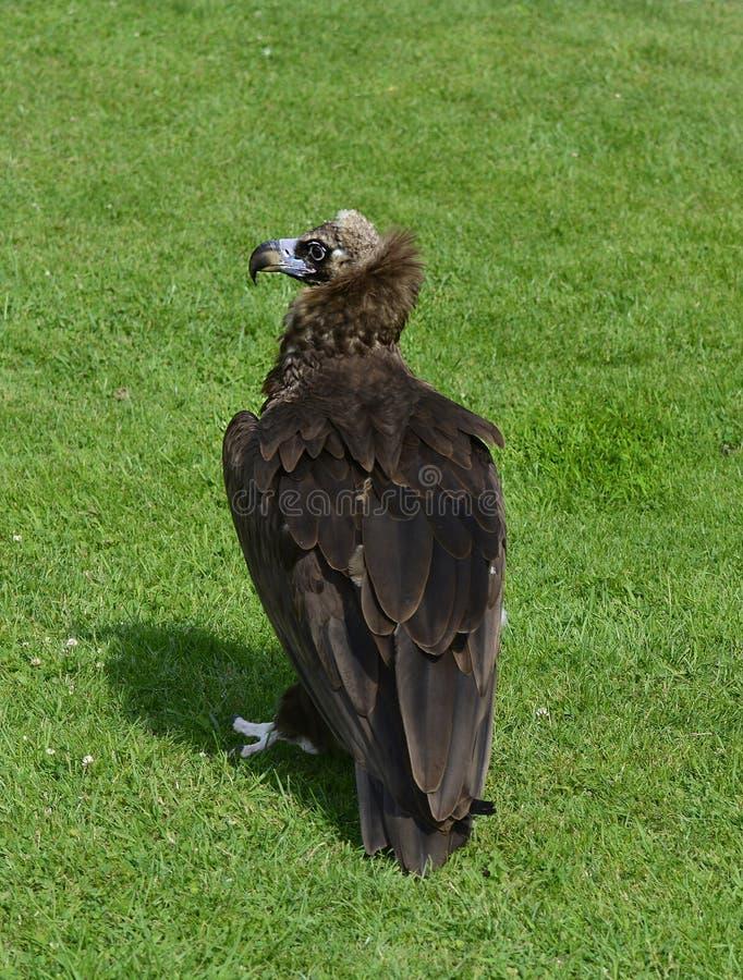 Zoologie, oiseaux photo libre de droits