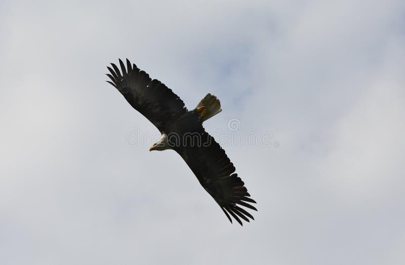 Zoologie, oiseaux images libres de droits