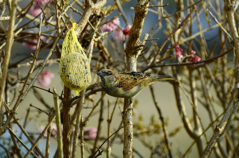 Zoologie, oiseaux photo stock