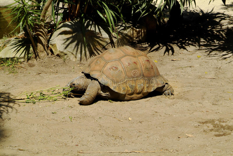 Zoologie, Schildkröte stockbild