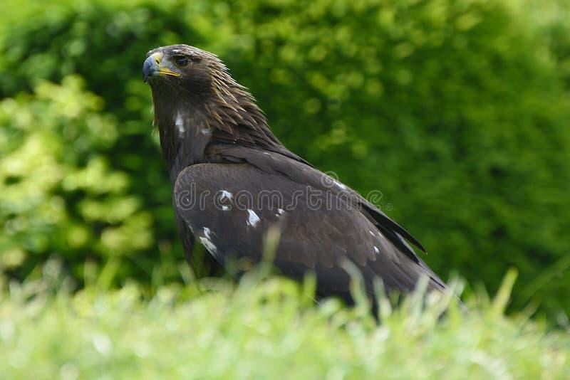 Zoologie, Vögel stockfoto