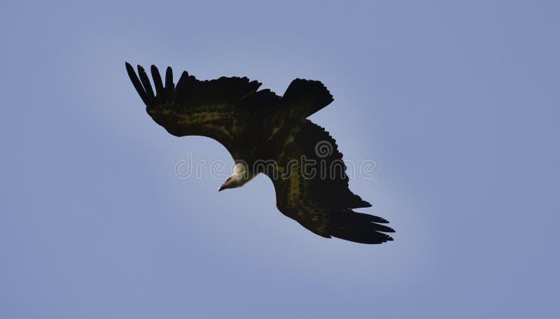 Zoologie, Vögel stockbild
