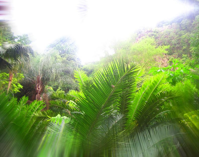 ZOOM BLUR EFFECT ON GREEN TROPICAL GROWTH stock images