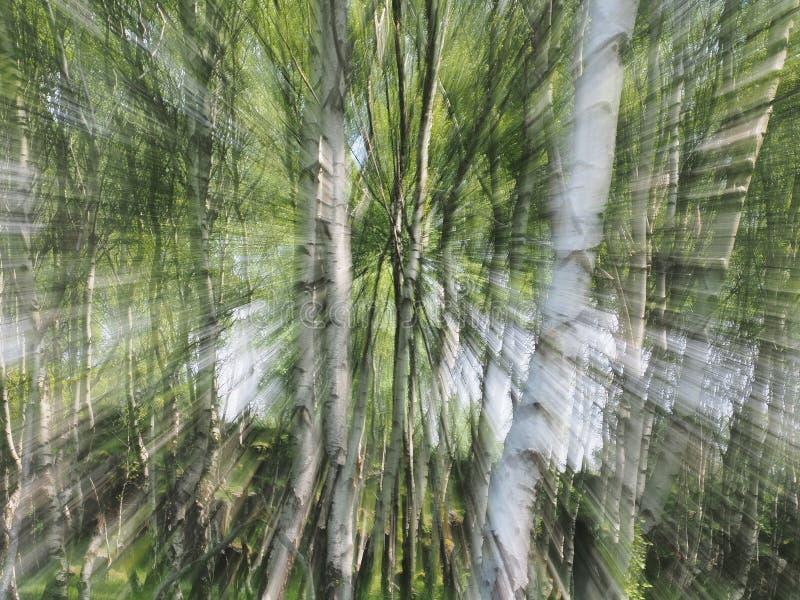 Zoom-Explosion von Bäumen lizenzfreies stockbild
