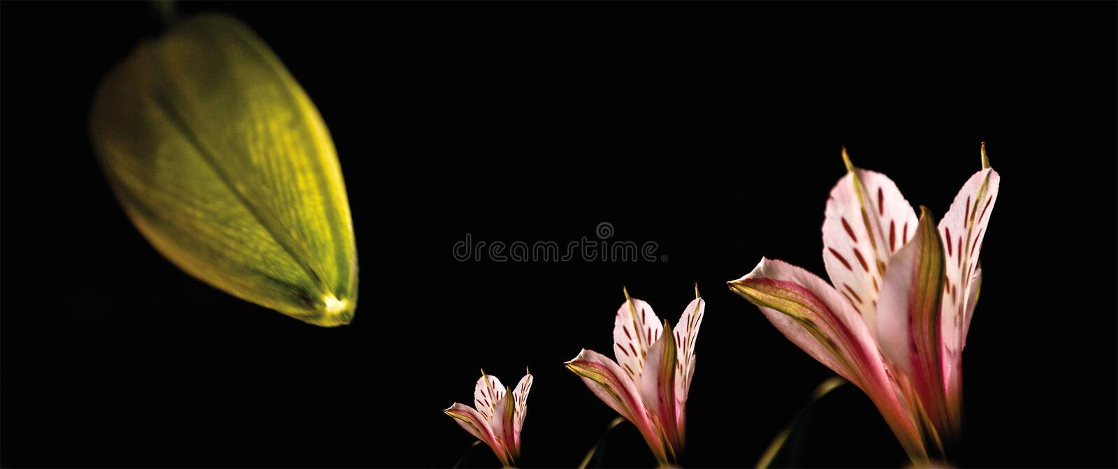 Zoom pink flower stock photography