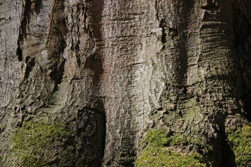 Close Up Tree Bark Textures stock photo