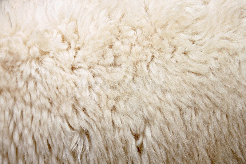 Download Zoom Wool of sheep. stock image. Image of farm, outdoor - 33117939