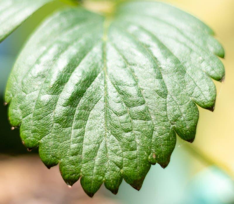 Zooma in på ett grönt blad royaltyfri fotografi