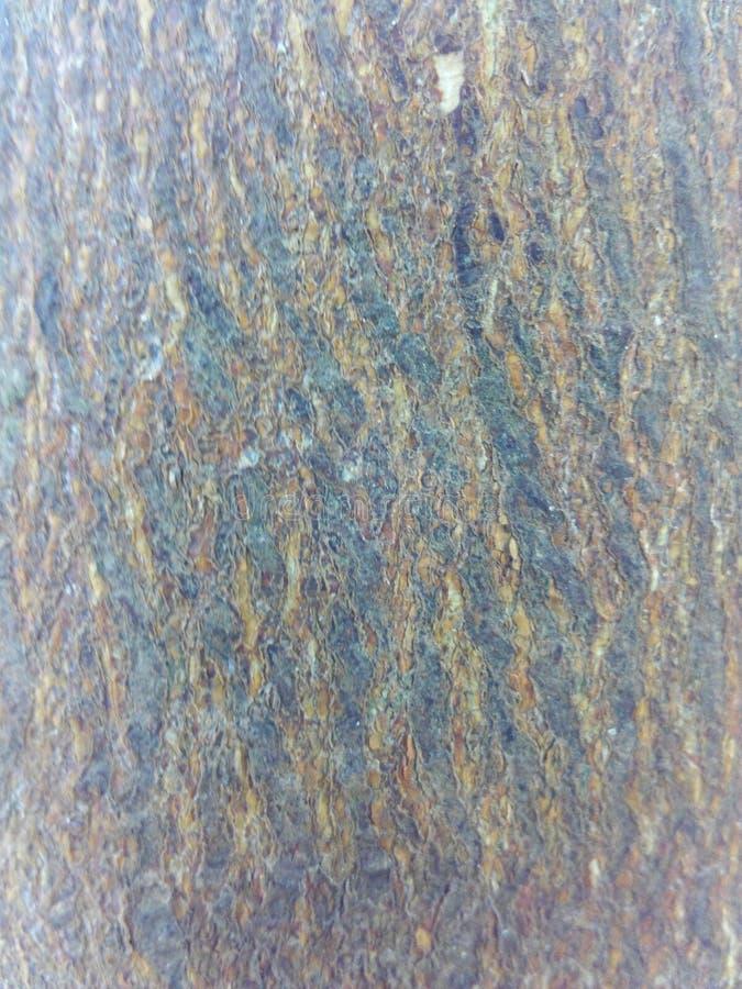 Zoomar det orange trädet för hår in arkivfoto