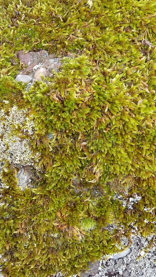 Zoomed-in view of moss textured background stock photography