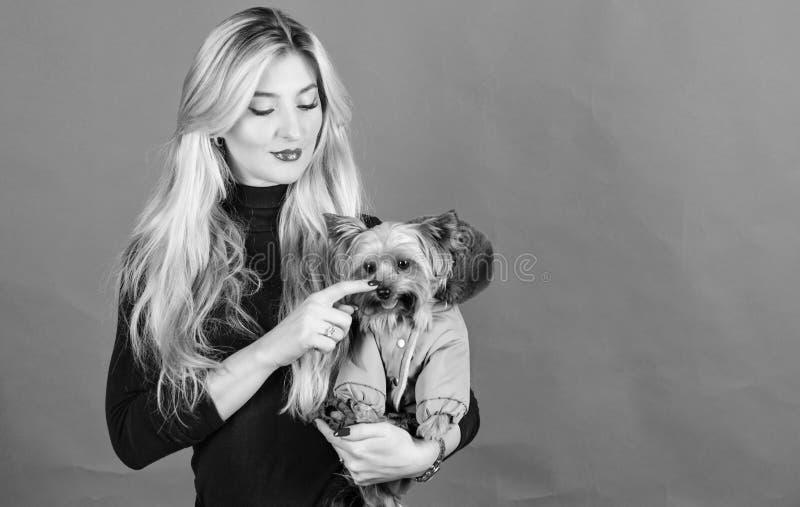 Zorg ervoor de hond in kleren comfortabel voelt kleding en toebehoren Het kleden van hond voor koud weer Welke hond kweekt royalty-vrije stock afbeelding