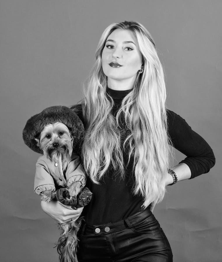 Zorg ervoor de hond in kleren comfortabel voelt kleding en toebehoren Welke hondrassen lagen zouden moeten dragen Meisjesomhelzin stock afbeelding