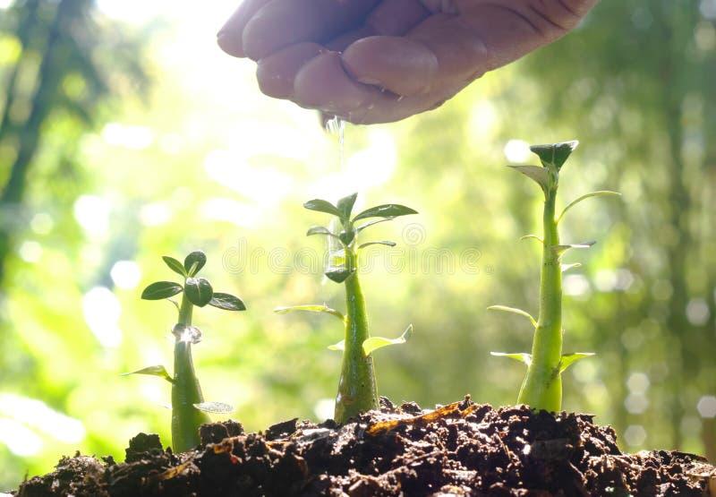 Zorg van het Nieuwe Leven - het Water geven Jonge plant - Uitstekend Effect stock foto