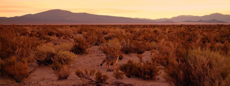 Zorro camuflado del desierto imagenes de archivo