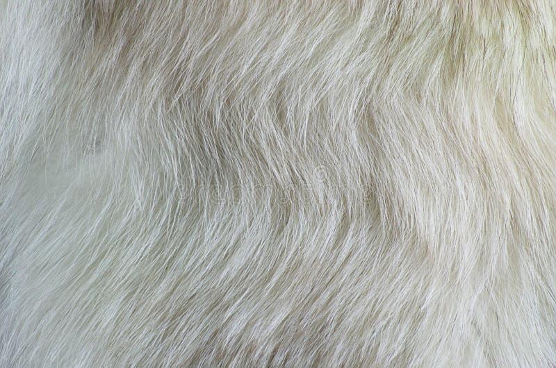 Zorro polar de la piel blanca de la textura imagen de archivo