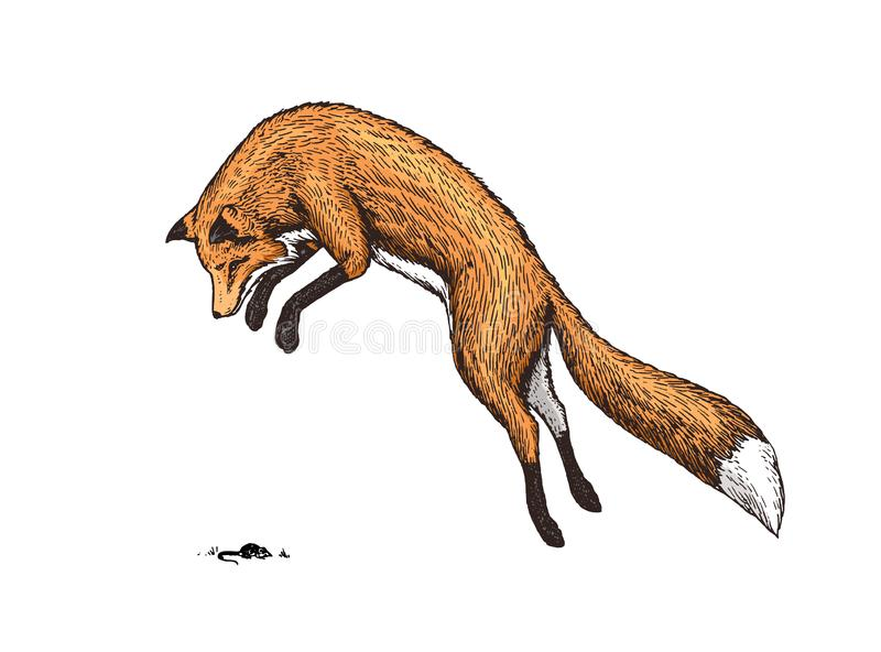 Zorro rojo de elevación Animal salvaje del bosque que salta para arriba Concepto de la búsqueda de la comida Estilo de la vendimi stock de ilustración