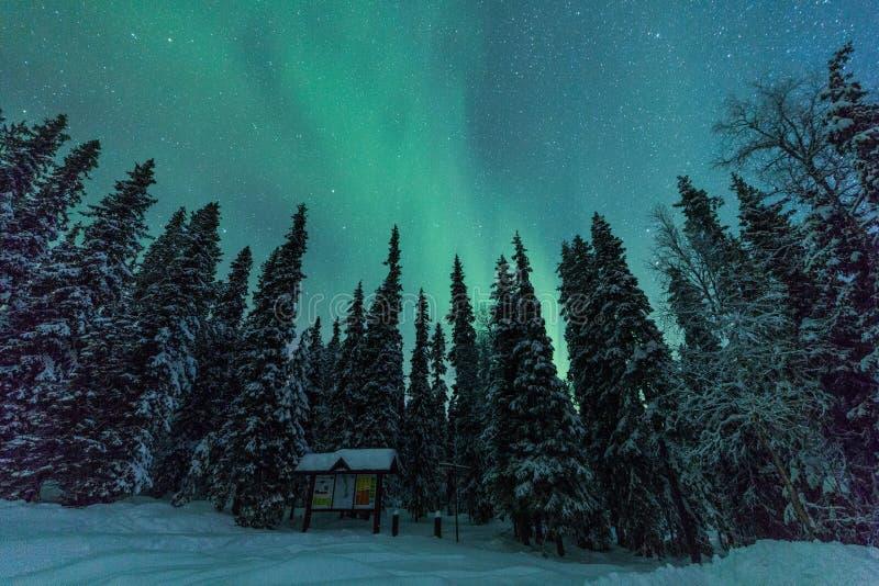 Zorz borealis w Finlandia, Lapland las (Północni światła) zdjęcia stock