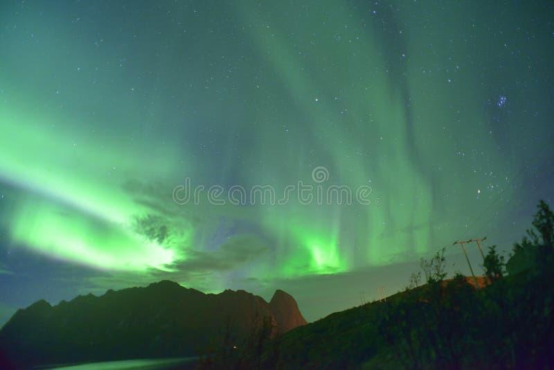 Zorza Borealis & x28; północny lights& x29; od Lofoten, Norwegia zdjęcie royalty free