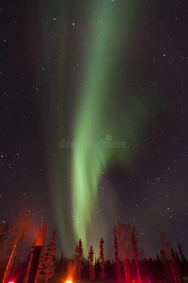 Zorza w drewnach Alaska fotografia stock