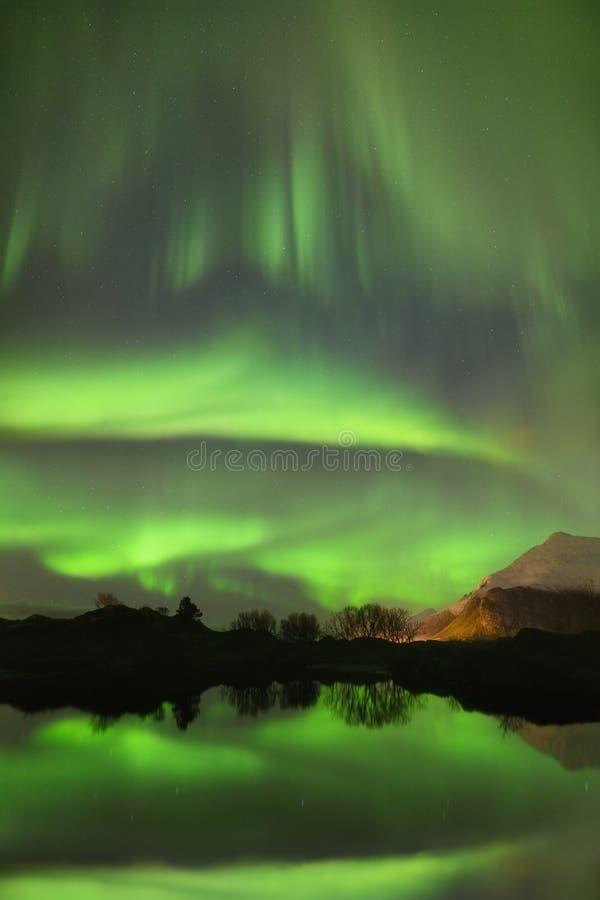 zorzy borealis ?wiat?a p??nocni Sceniczny fjord na Lofoten wyspach, Reine, Norwegia zdjęcie royalty free