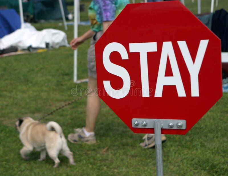 Download Zostań zdjęcie stock. Obraz złożonej z kundel, pies, przerwa - 44504
