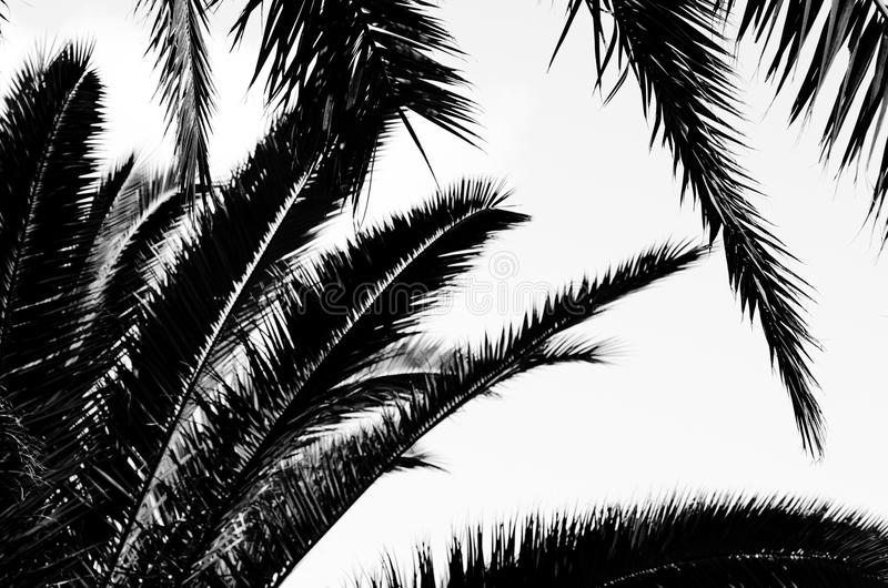 zostaw drzewka palmowego 3d odpłacający się pojęcie czarny wizerunek biel zdjęcia royalty free