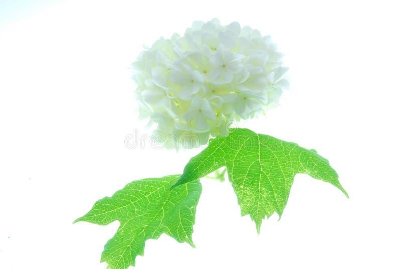 zostaw kwiaty white zdjęcia stock