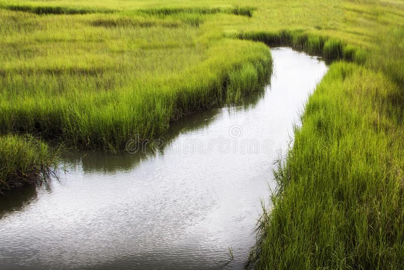 Zout moeras in Shem Creek in Onderstel Prettig Zuid-Carolina stock foto's