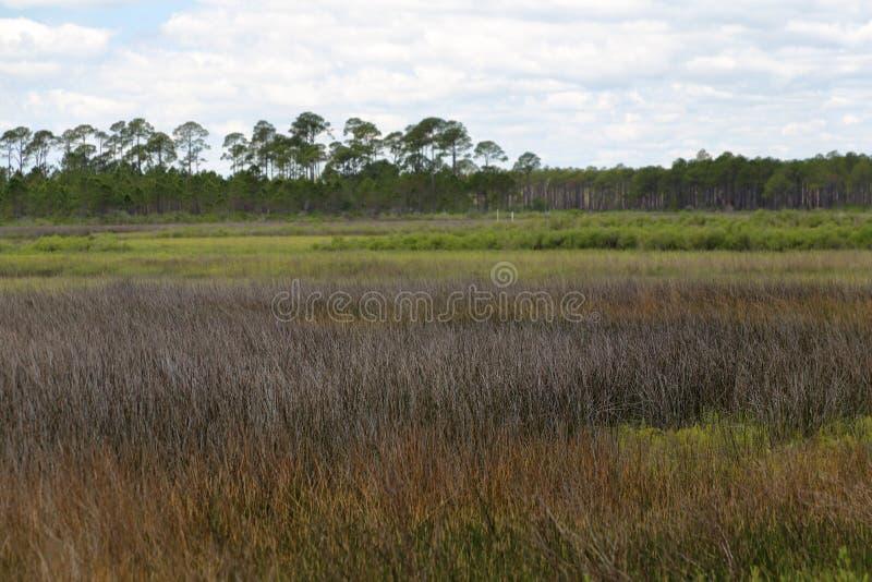 Zoutwatermoeras bij het Kale Park van de Puntstaat Florida stock foto's