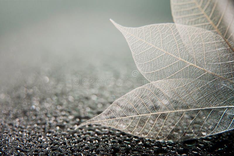 Zredukowani liście na czarnym abstrakcie moczą tło obraz stock