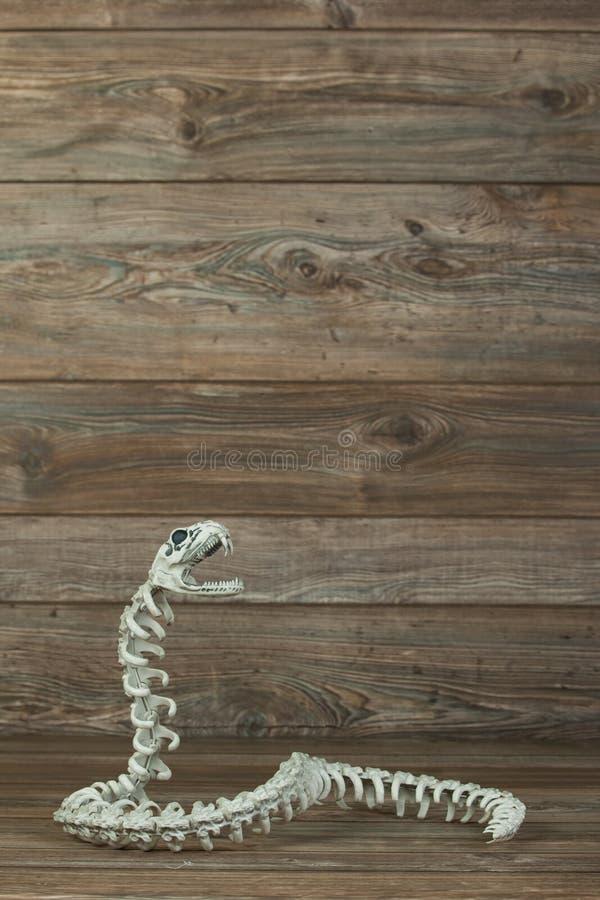 Zredukowany wąż z odbitkowym pokojem obrazy royalty free